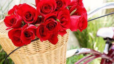 Photo of Prefeitura abre credenciamento para comércio de rosas no Dia das Mães