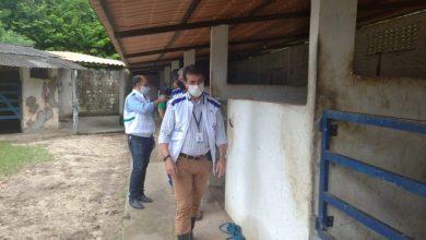 Photo of Vigilância Sanitária notifica haras em Maceió com irregularidades na criação dos animais