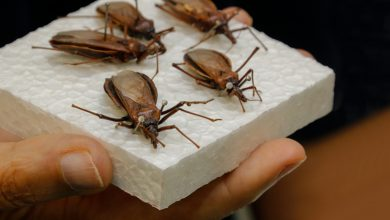 Photo of Saúde atualiza profissionais sobre atendimento e monitoramento de casos de Doença de Chagas