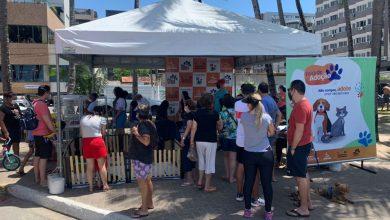 Photo of Feira de Adoção de animais irá ao shopping Pátio e à Rua Aberta no fim de semana